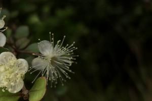 Maori plant names