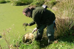 Sampling algae.