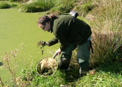 Sampling for algae.