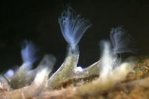 Bryozoa. Image: Stephen Moore