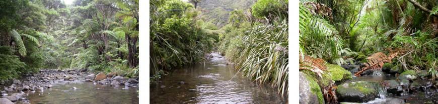 Good quality streams with healthy invertebrate communities. Left to right: Karamatura Stream, Pararaha Valley, Karekare, Upper Opanuku, Walker Kauri track.