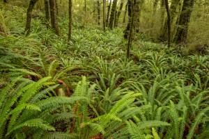 beech forest, Kepler Track. Image: Bradley White