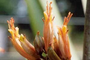 Hūhiroa: flowers