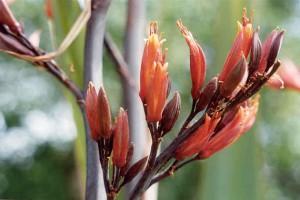 Kōhunga: flowers