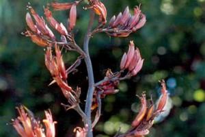 Opiki: flowers