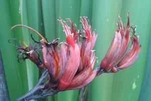 Ruapani: flowers