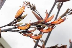 Tupurupuru, Tarariki: flowers