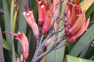 Turingawari: flowers