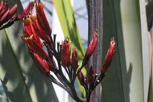 Tūtaewheke: flowers