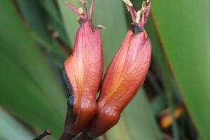 Wharanui: flowers