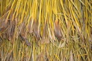 Pīngao tags on a cloak made by Mata Murray. Image: Sue Scheele